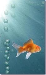 Aquarium-i900-g-sensor