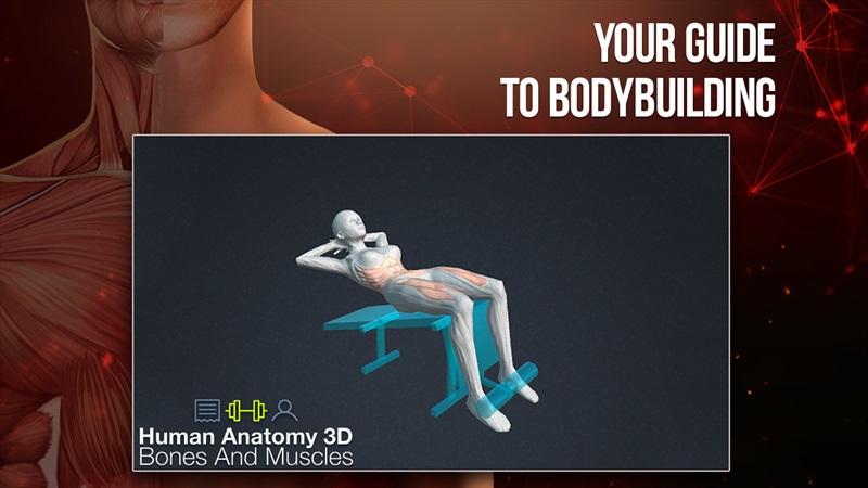 sports anatomy