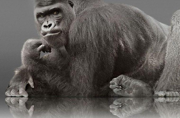 Corning announces Gorilla Glass 5, twice as resistant to breakage when compared to Gorilla Glass 4 20
