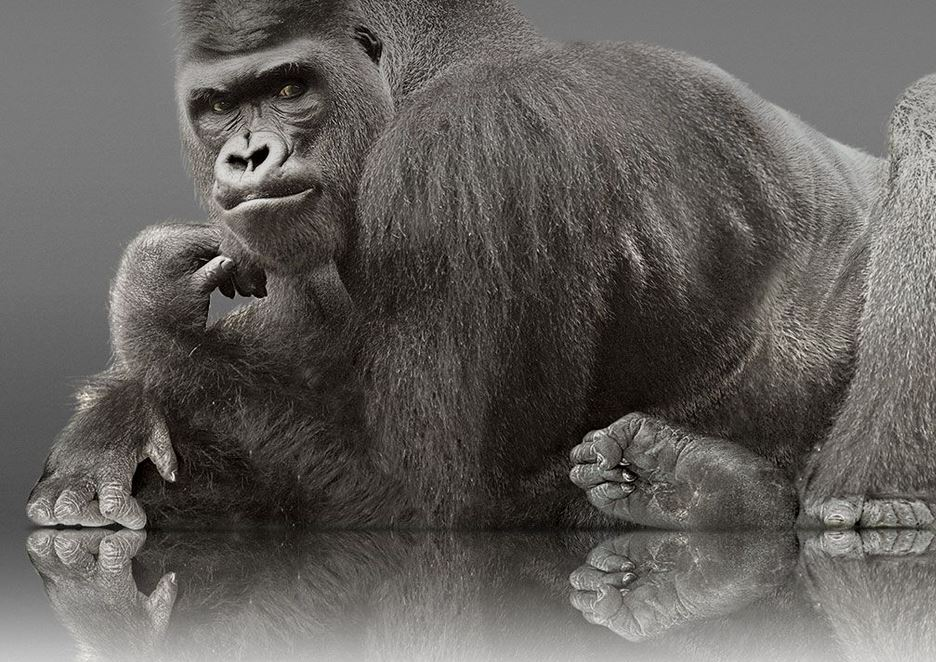 Corning announces Gorilla Glass 5, twice as resistant to ...