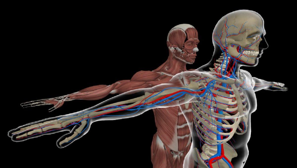 holo-anatomy