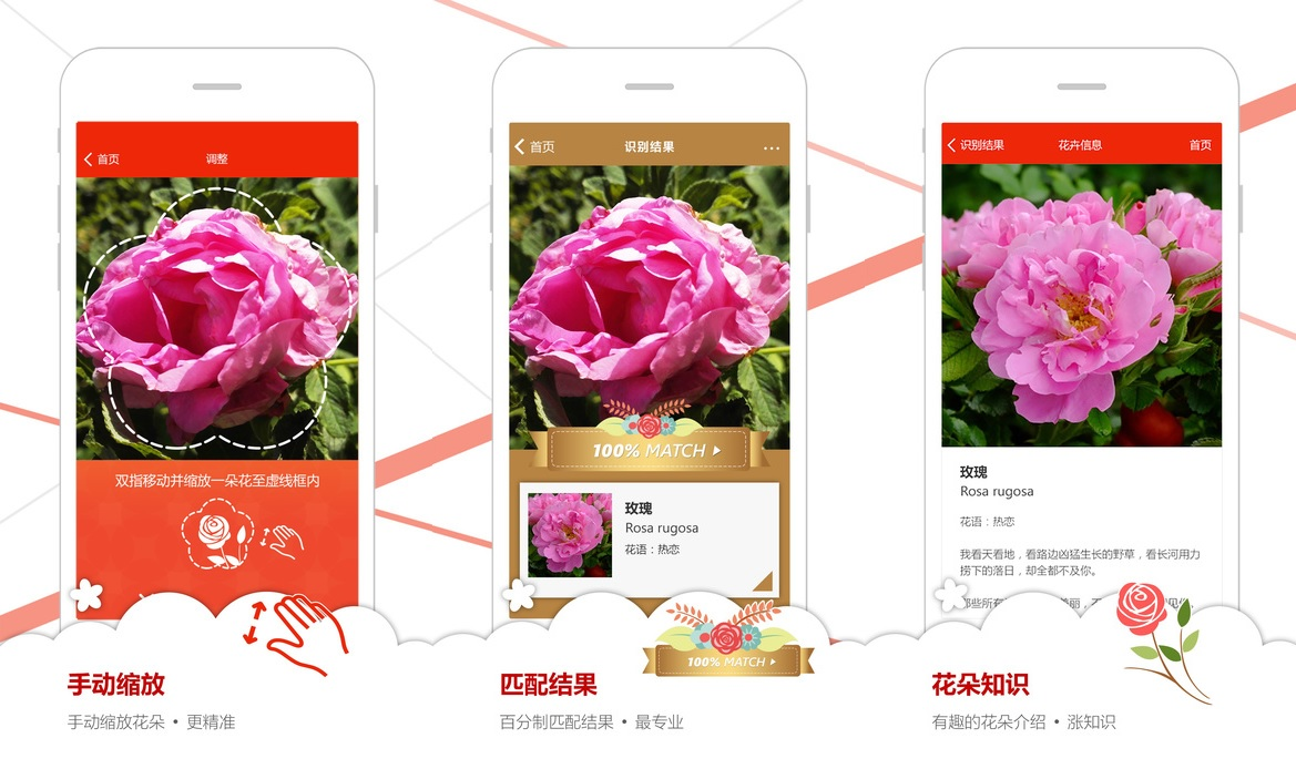 microsoft garage 39 s flower recognition app now available in china for ios users mspoweruser. Black Bedroom Furniture Sets. Home Design Ideas