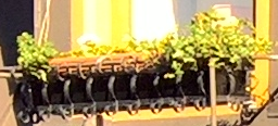 same-size-crop-lumia-950