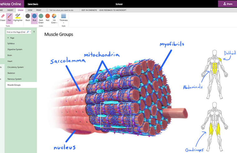 OneNote's drawing features are coming to the web 25