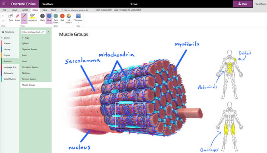 OneNote's drawing features are coming to the web - MSPoweruser