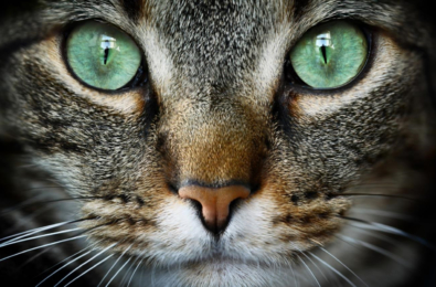 Cat Lovers: Get Microsoft's free Cat Expressions Windows 10 theme 5