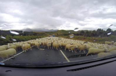 Forza Horizon 4's Sheep AI wins admiration 22