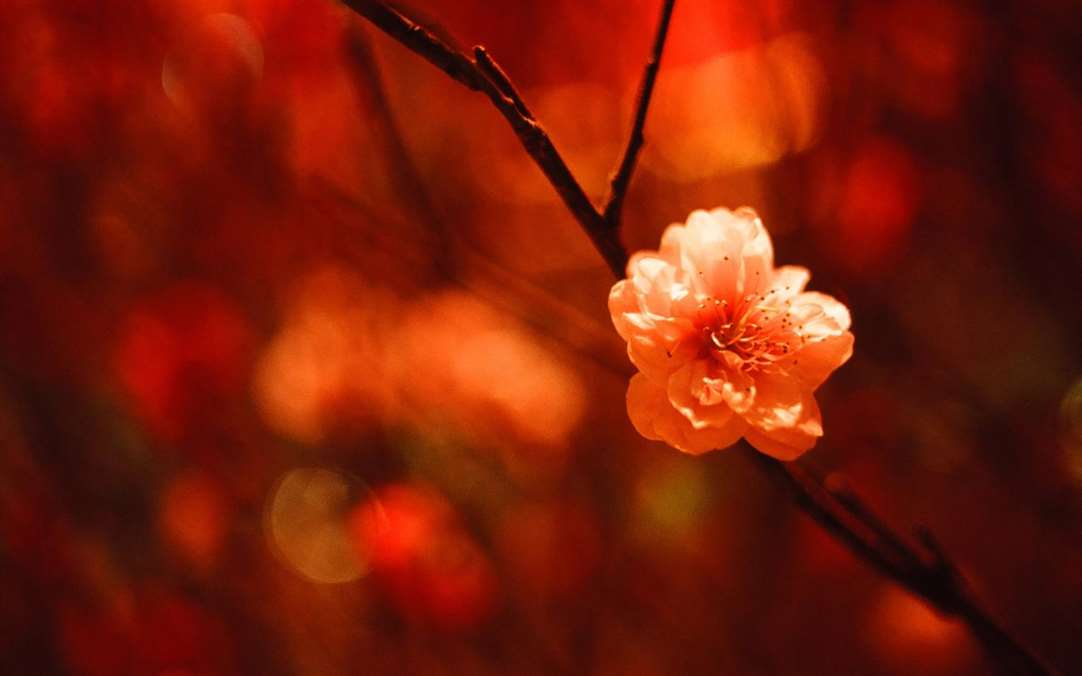 Windows 10 Wallpaper Pack: Microsoft Release Chinese Year Of The Pig Windows 10