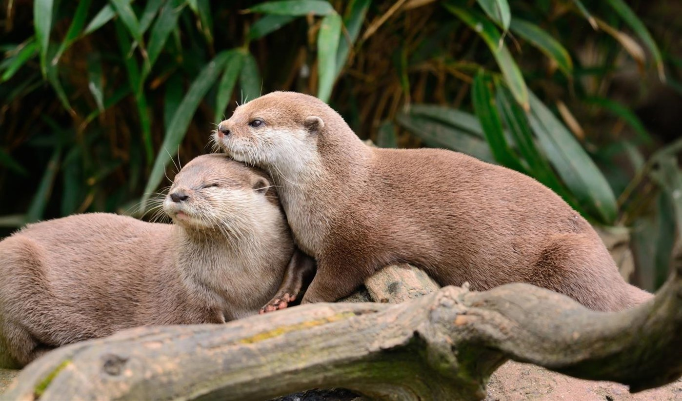 Windows 10 Theme Download The Brand New Otters Theme Pack
