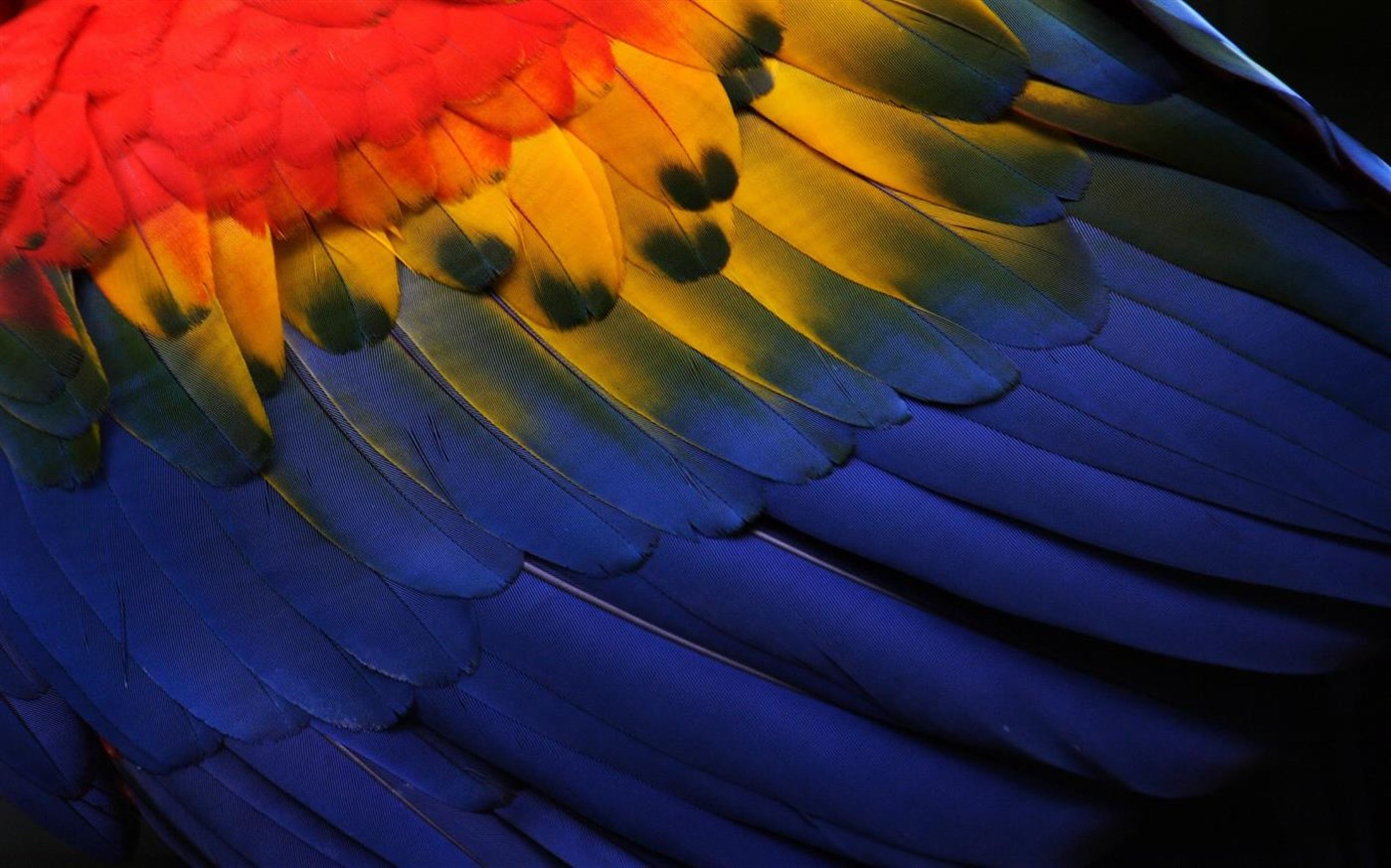 photo of Windows 10 Users: Download this amazing new 'Feathers' theme from Microsoft image