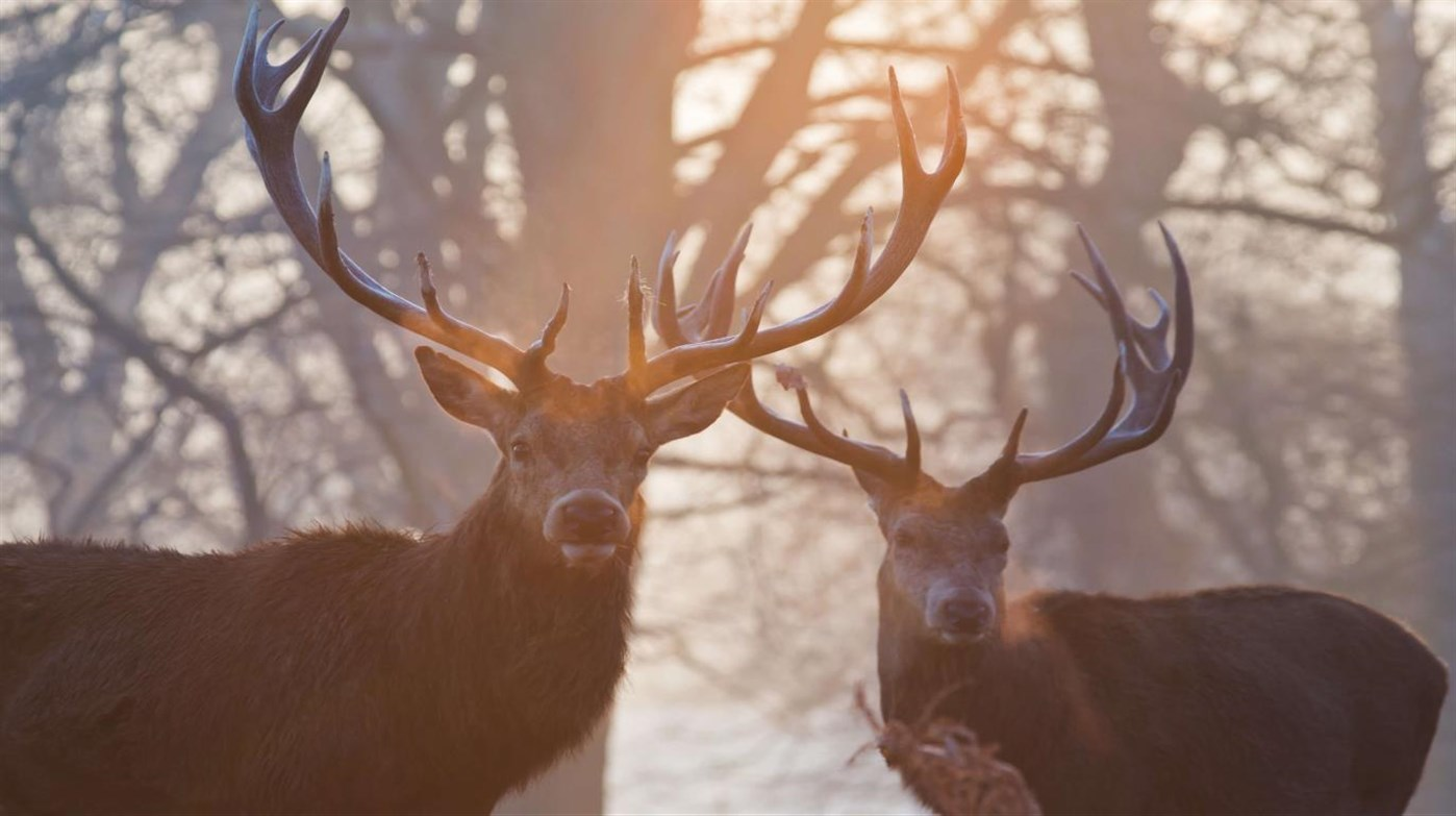 Bring the wild indoors with the free 4K National Geographic Antlers in Autumn Windows 10 wallpaper pack 2