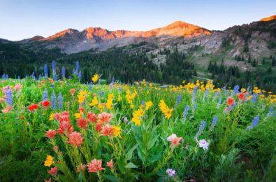 Windows 10 Theme: Download 'Wildflowers PREMIUM' theme pack from Microsoft Store 5