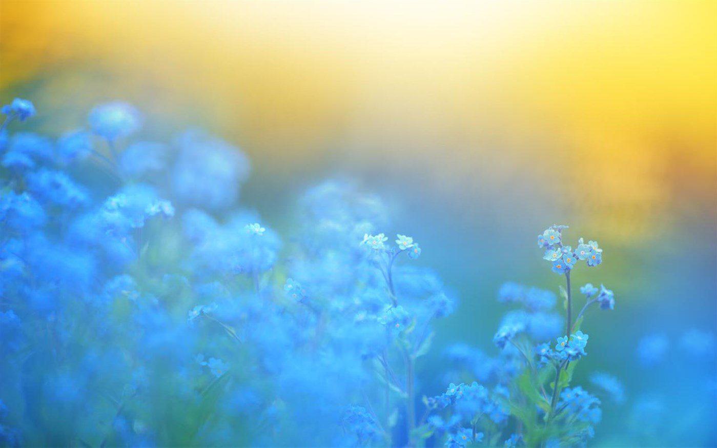 Windows 10 Theme: Download Microsoft's 'Flower Petals' theme pack 1