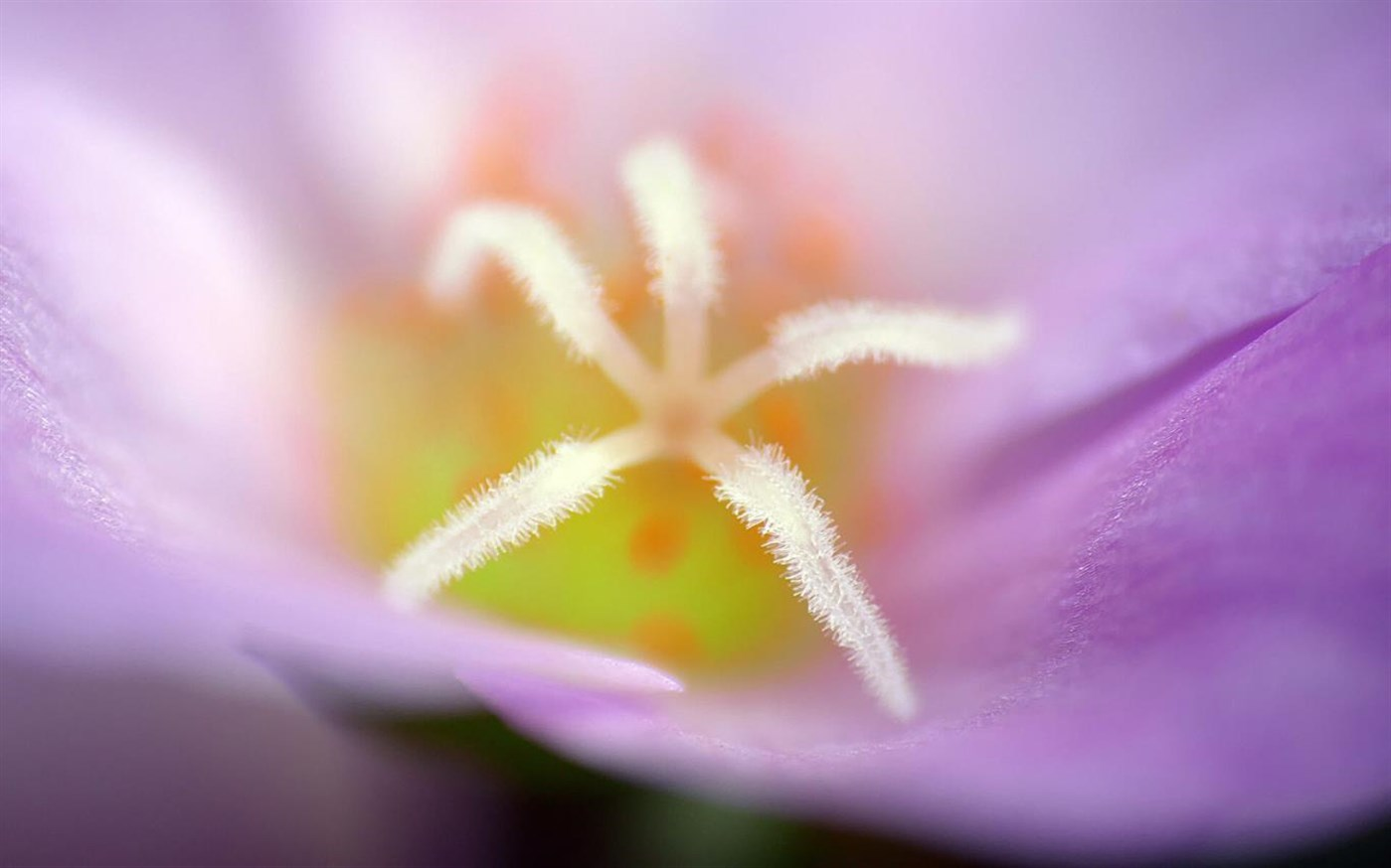 Windows 10 Theme: Download Microsoft's 'Flower Petals' theme pack 2