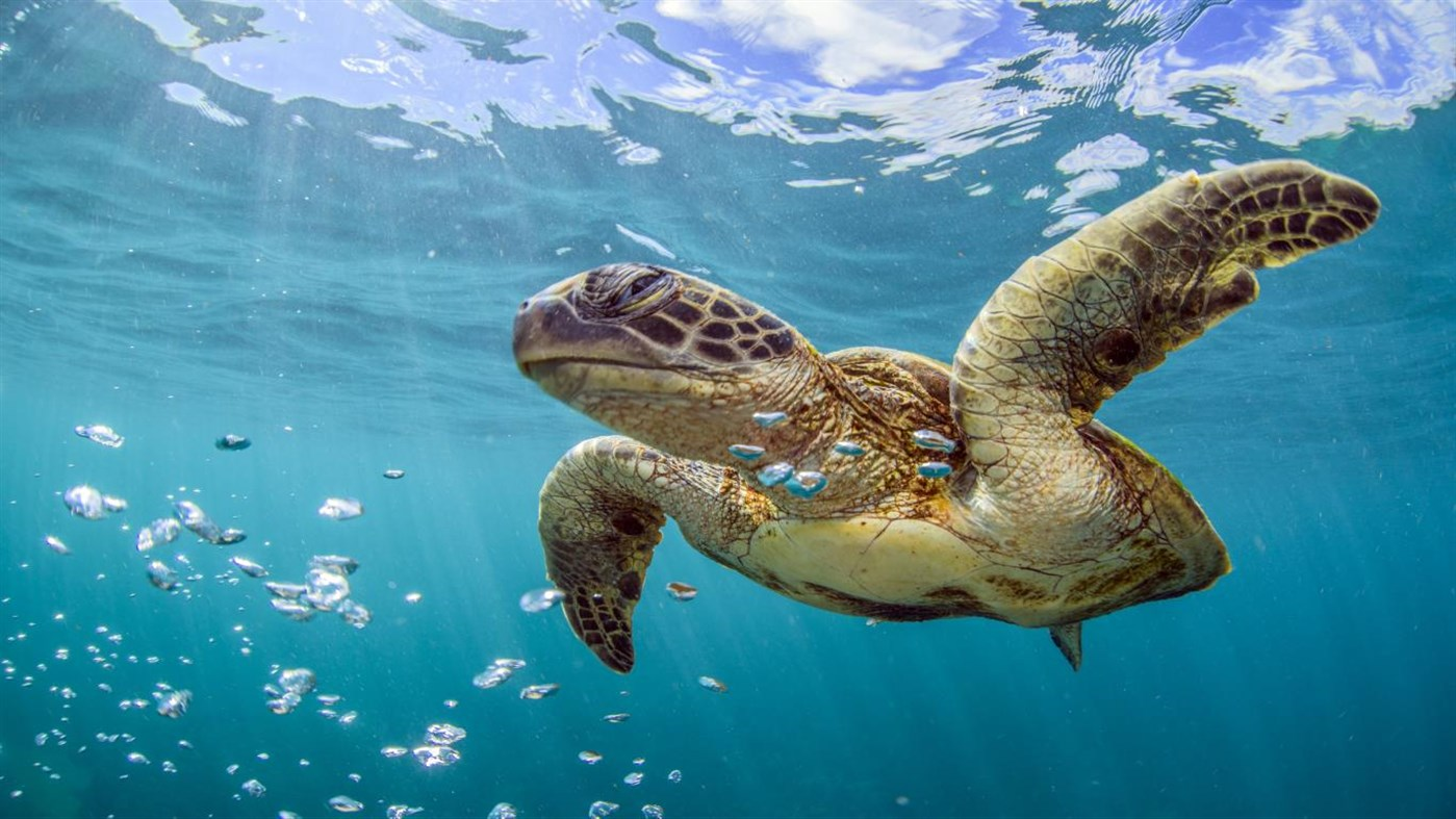 Microsoft Celebrates World Oceans Day With A New Premium 4k Wallpaper Pack For Windows 10 Mspoweruser