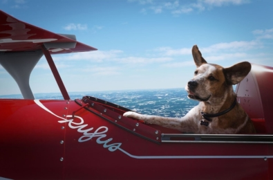 Microsoft Flight Simulator Rufus dog in plane