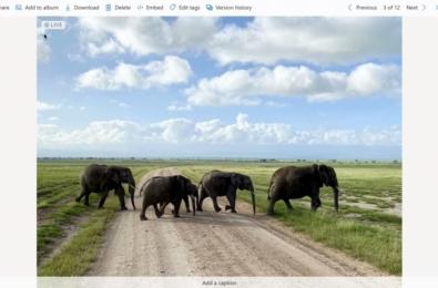 Microsoft OneDrive Live Photos